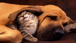 MUSIC THERAPY For Pets ♣ Sleep Music for Dogs and Cats - Relax, De-Stress, Calm Down