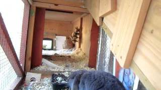 Super Size Rabbit Hutch Penthouse Suite