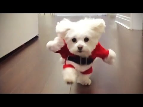 Funniest DOGS IN COSTUMES 2017 [Funny Pets]