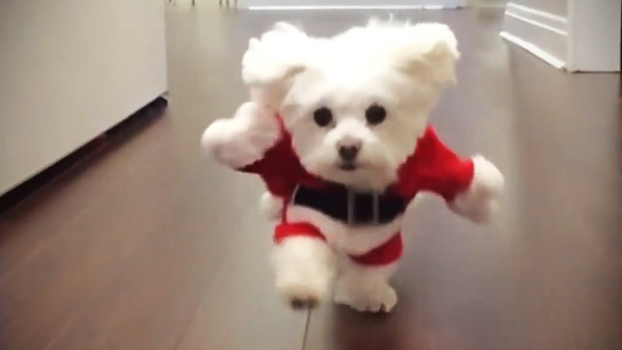 Funny Puppies In Costumes
