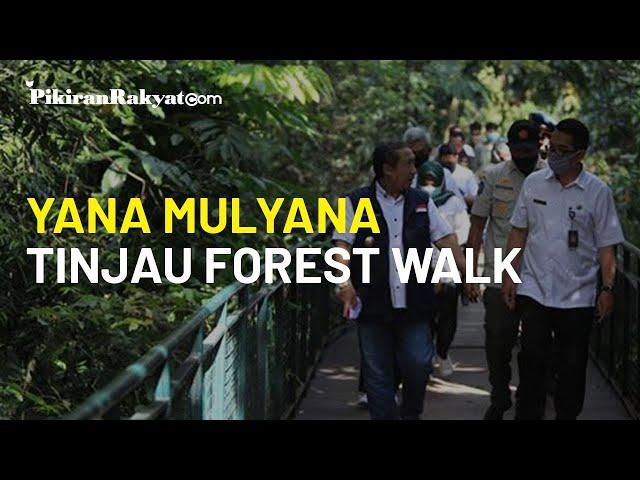 Dibuka Kembali Pekan Depan, Yana Mulyana Tinjau Forest Walk Taman Babakan Siliwangi