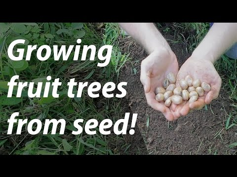 Growing Fruit Trees from Seed (and nuts, too!) (Day 14 of 30)