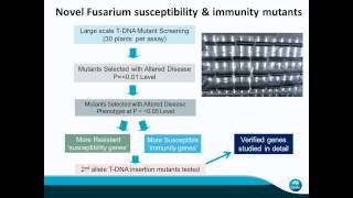 What we know and don't know about Fusarium pathogens