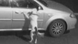 Брошенная собака бежала за машиной сколько могла
