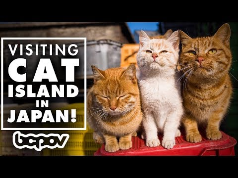 AN ISLAND FULL OF CATS!? | Visiting Cat Island In Japan! - Tashirojima