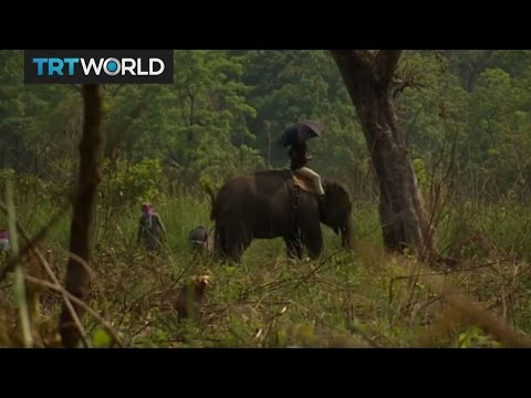 Nepal Wildlife: Conservation efforts need to be increased