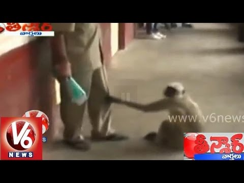 Crazy Monkey At