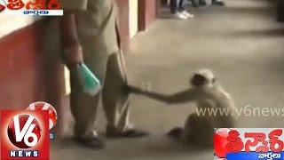 Crazy Monkey At Indore    Madya Pradesh    Teenmaar News