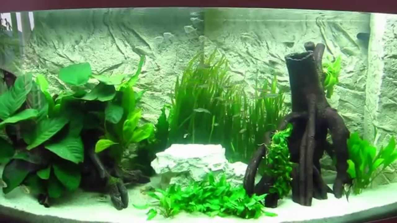 s damerika aquarium youtube. Black Bedroom Furniture Sets. Home Design Ideas