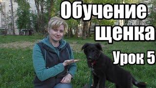 ОБУЧЕНИЕ ЩЕНКА -  ДРЕССИРОВКА СОБАКИ С НУЛЯ -  Урок 5 - Понять собаку