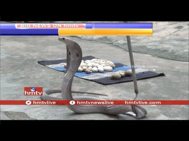 Snake Eggs Hulchul In Bhadradri Kothagudem District | Telangana | HMTV