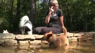 Raising Cane's Dog Park At Kiroli West Monroe La