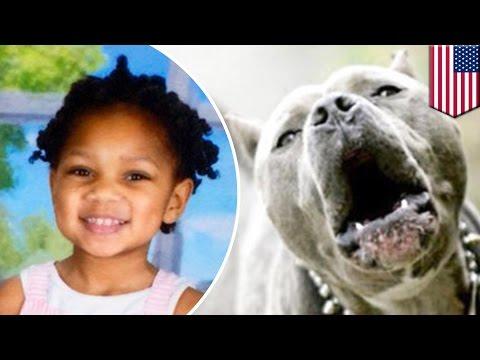 Perros pitbull atacan a una niña de 3 años de edad de visita en la casa de su abuela