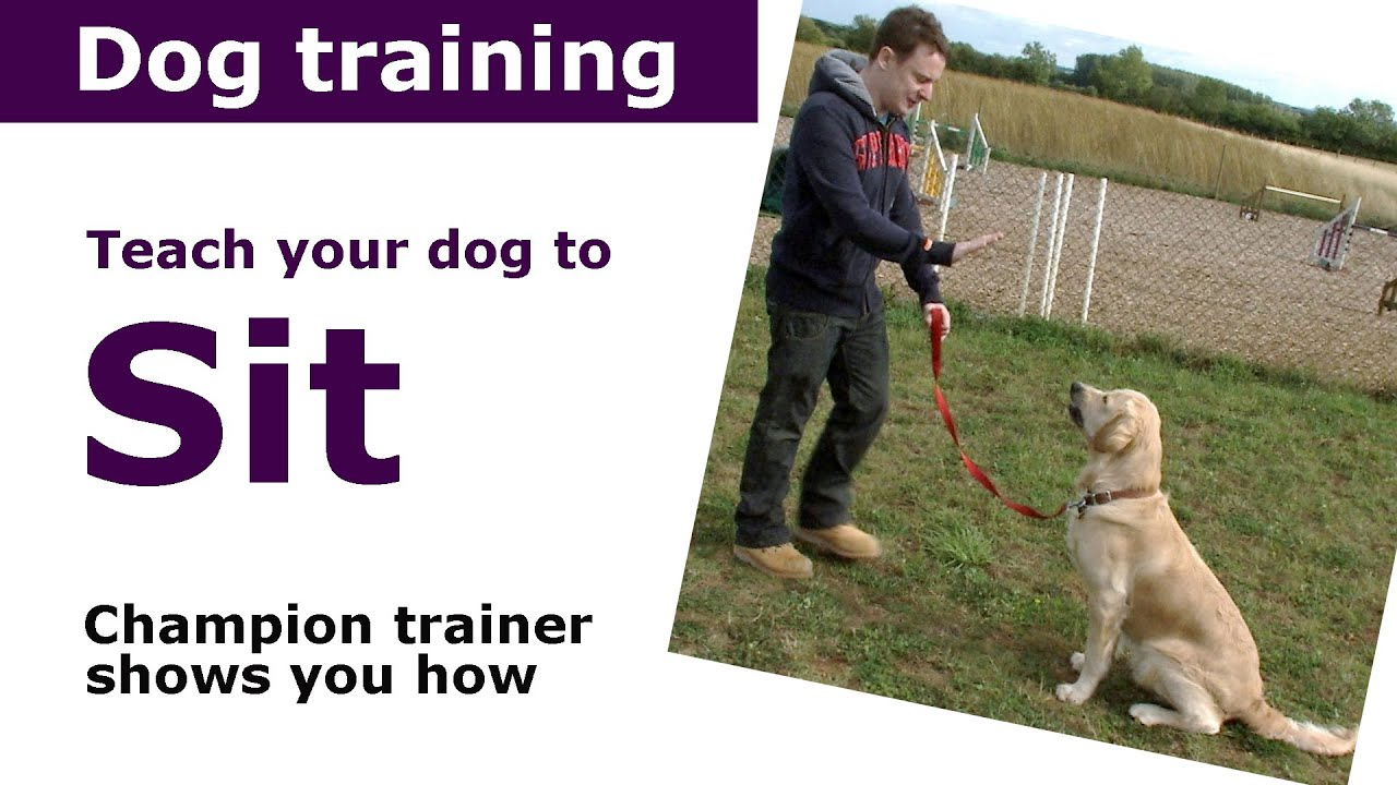 Dog Training Advice, Including Puppy Training Tips From an Expert