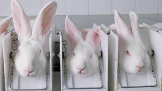 Ban Animal Testing Essay  Aafireplacedesignscom Essays Animal Testing Should Not Be Banned Get  Promo Code  Chaptentroductory The Subject Of This Essay Is Not The Socalled Liberty  Of The Will