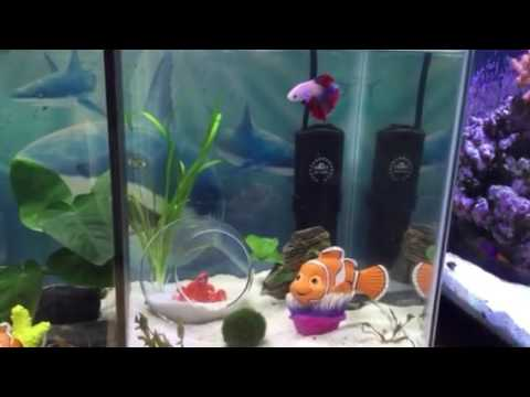 Divided 10g betta fish tank finding dory theme youtube for Finding dory fish tank