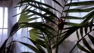 外に蝉の幼虫がいたので拾ってきちゃいました♪観葉植物につけておきまし...