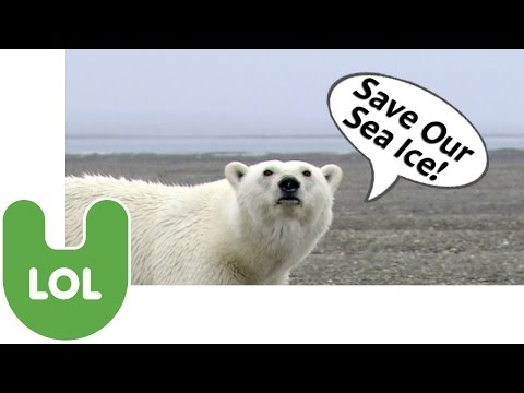 Polar Bears: Funny Talking Animals