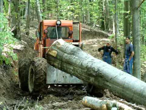 Logging in Transylvania