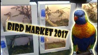 Aviary birds, vogelmarkt Zwolle 2017 (bird market)