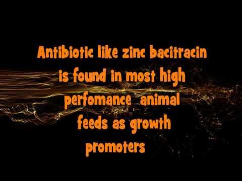Natural animal feeds