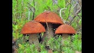 Общая характеристика грибов. Биология 5 класс