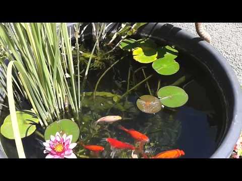 Mini laghetto pesci rossi e carpe koi for Laghetto pesci rossi e tartarughe