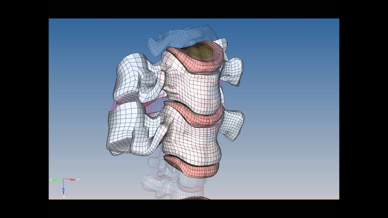 Global Human Body Models Consortium Ghbmc Youtube