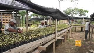 Viveros forestales en Riosucio, Chocó