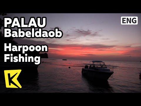 【K】Palau Travel-Babeldaob[팔라우 여행-바벨다오브]산호바다 작살 낚시/Harpoon Fishing/Coral Sea