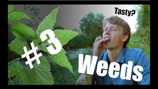 Why You Should Care About Garden Weeds (ft Tom Auld)