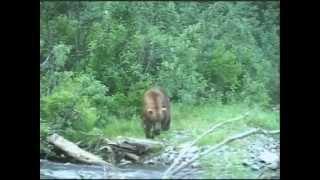 Handgun Bear Hunt @ Stephan Lake Lodge