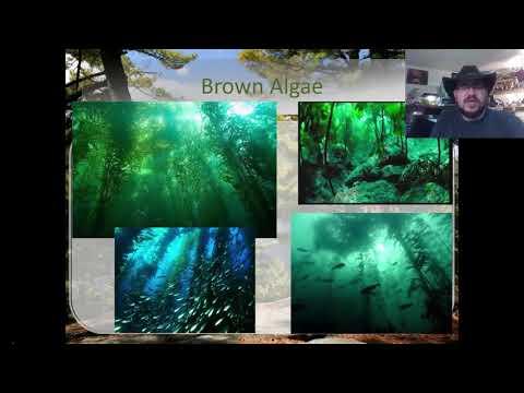 Fall 2017 Bio 1080 Bio 1   Metropolitan State University of Denver   Lecture 10   Photosynthesis