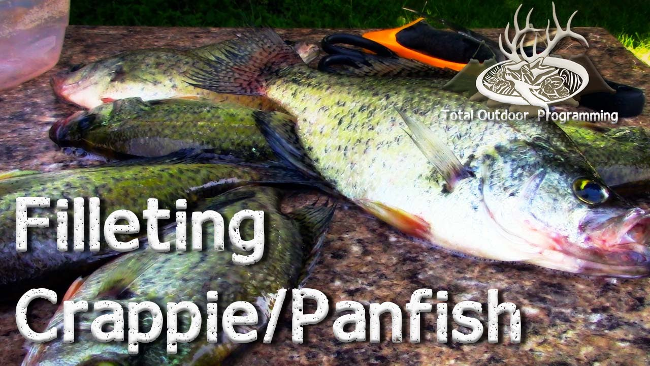 How to clean fillet crappie panfish after a good night for Crappie fishing at night