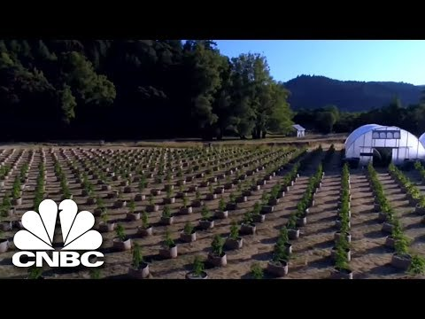 Is This The Future Of Pot Farming? | The Profit | CNBC Prime