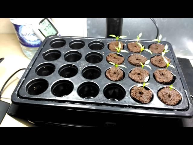 5CM, Schwarz Kletterpflanzen 10 St/ück Plant Rooting Ball 5//8//12 CM Assisted Cutting Rooting Box,Verwendet die alte Methode der Luftschichtung B/äume f/ür Innen- und Au/ßenpflanzen wie Rosen