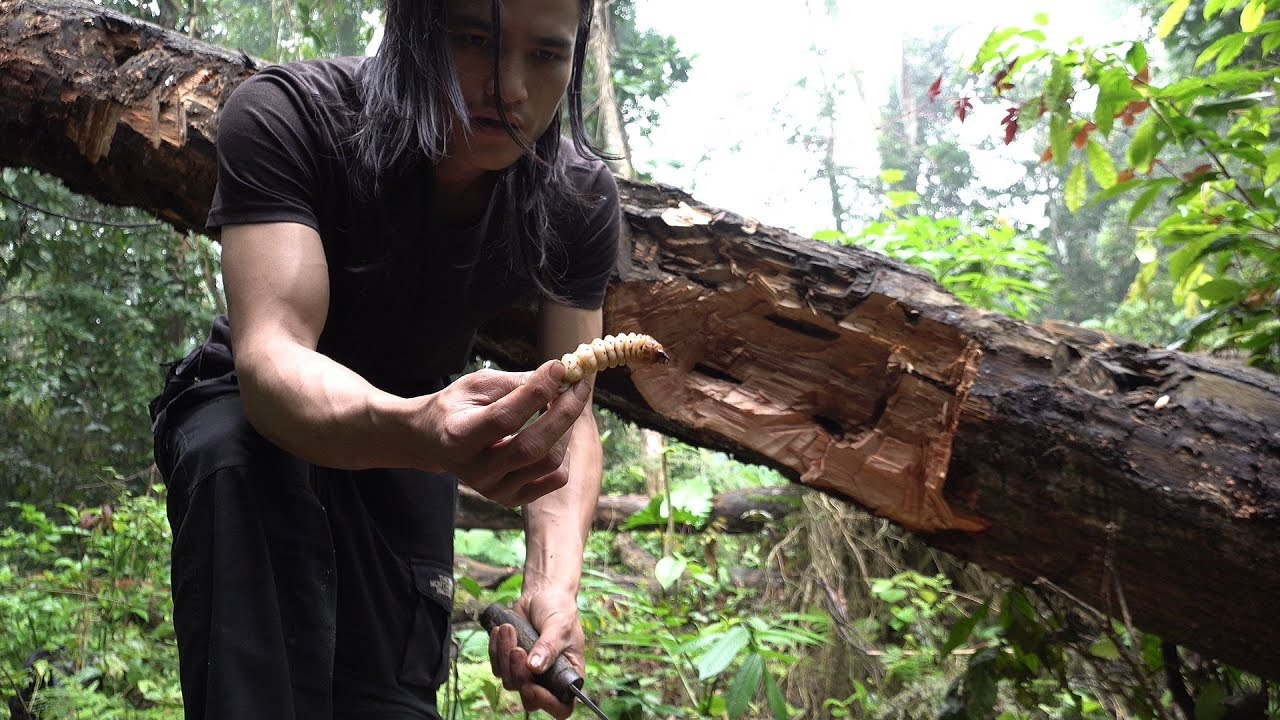 Lots of Wood Worms are Fat and Sweet, Survival in the Tropical Rainforest, Ep 132