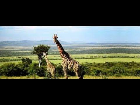 Tiere in Afrika Kenia Safari Zebras Löwen Elefanten
