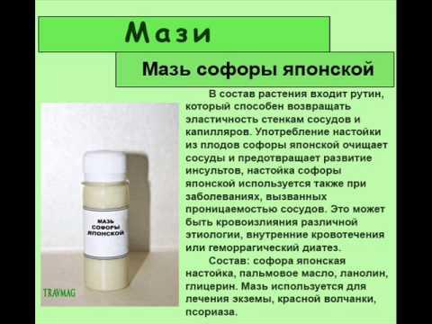 Софора японская - лечебные свойства и противопоказания