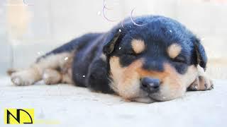 10 Hours Calming Sleep Music 💖 Stress Relief Music, Insomnia, Relaxing Sleep Music ♬ Baby Dog Pet