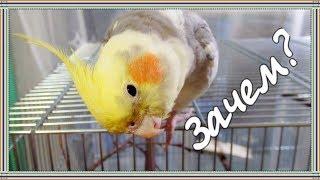 Влог | Перестановка в клетке у попугаев. Реакция птиц на изменения.