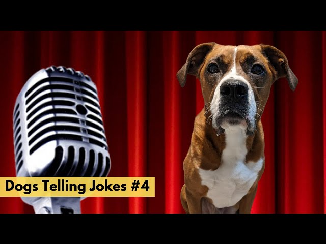 Dogs Telling Jokes 5  - Bane the Boxer