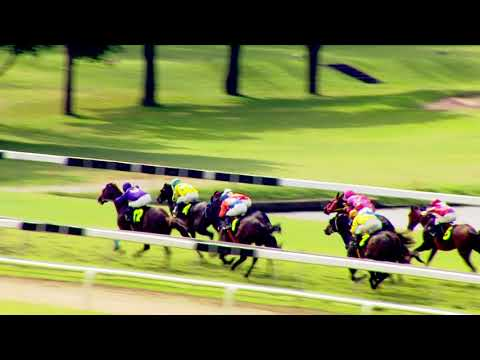 Thailand horse racing 2017 Dec,2 Race 4 Div 1