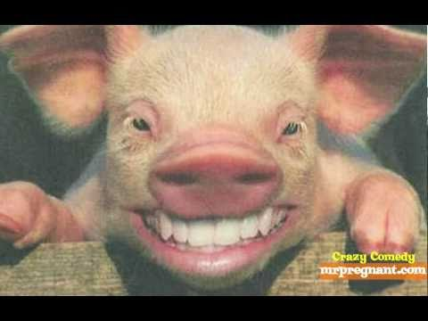 I Want To Bang A Pig