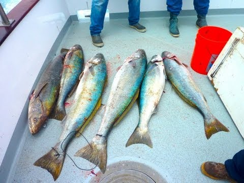 Coral Sea Sportfishing - 2 day San Nicolas Island - July 6 - 7 2013