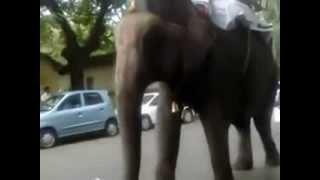 Прикол. Слон уронил велосипед. Смешное видео(Прикол, подборка приколов, ржач, смех, развличения, смешные истории, смешные приколы, бесплатные приколы,..., 2014-02-07T10:29:51.000Z)