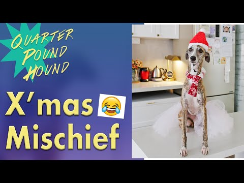 Ep 3: 🎅🏽Christmas Mischief with Rue the Whippet Dog 🛍