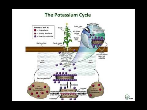 IPNI Webinar Series: Potassium in South Asian Agriculture