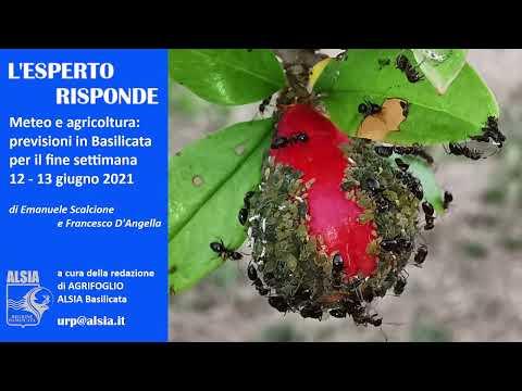 Basilicata, le precipitazioni del 12-13 giugno pot...