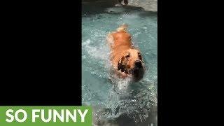 Slow motion captures dog learning to swim